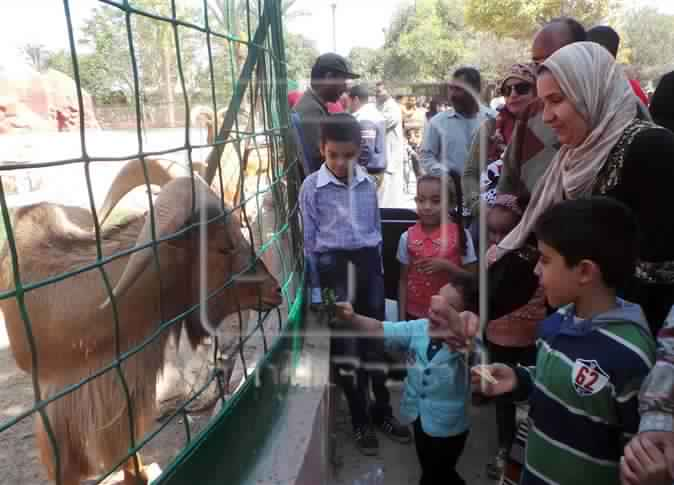 Despite high temperature, 65,000 visitors to the zoo on first day of eid
