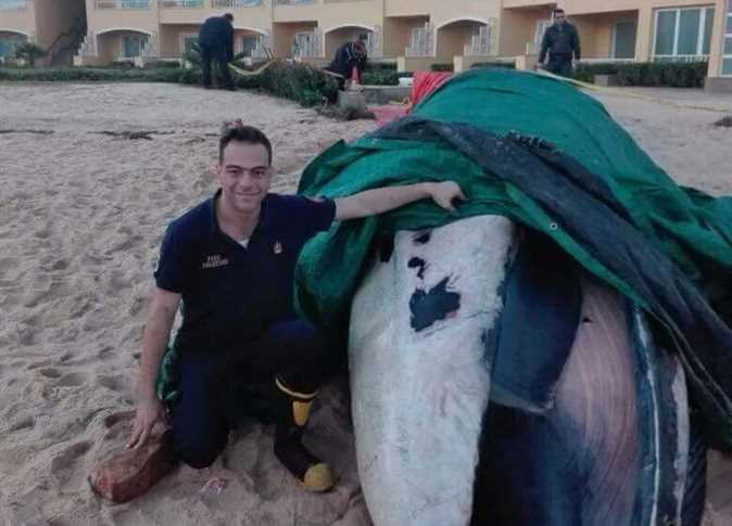 Egypt: Dead Whale Washes Up On Alexandria Shore