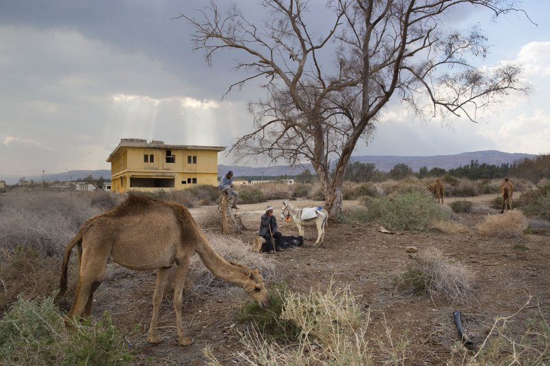 By Dead Sea, camels graze at Earth's lowest place