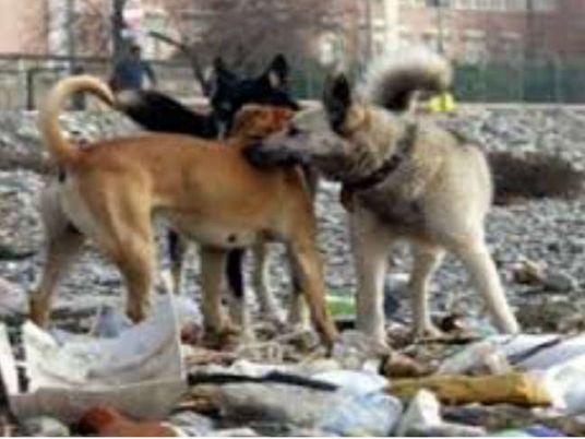 Asociación suiza para soportar los gastos de perros callejeros' de la castración ... - Independiente de Egipto 1